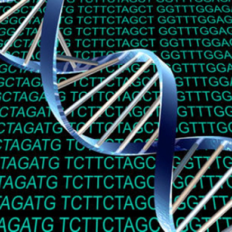 ADN-large